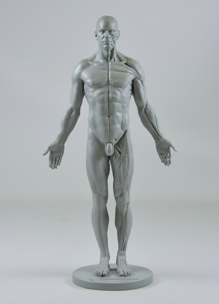 3dtotals Anatomical Collection Male Figure Concept Art World