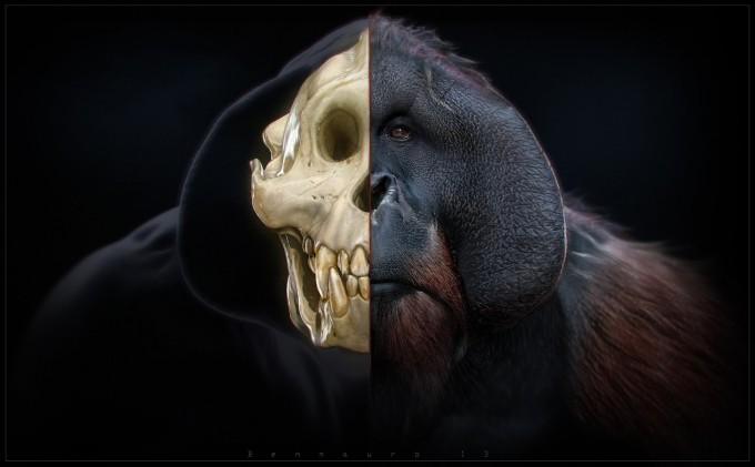 Ben_Mauro_FZD_TANG_render_skull4