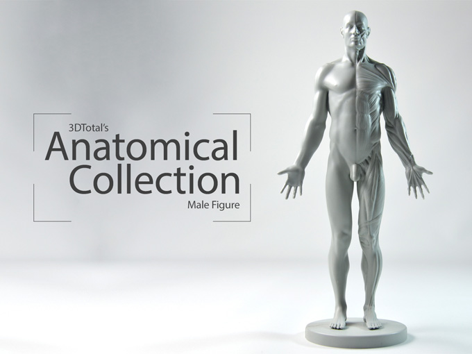 3DTotal's Anatomical Collection: Male Figure