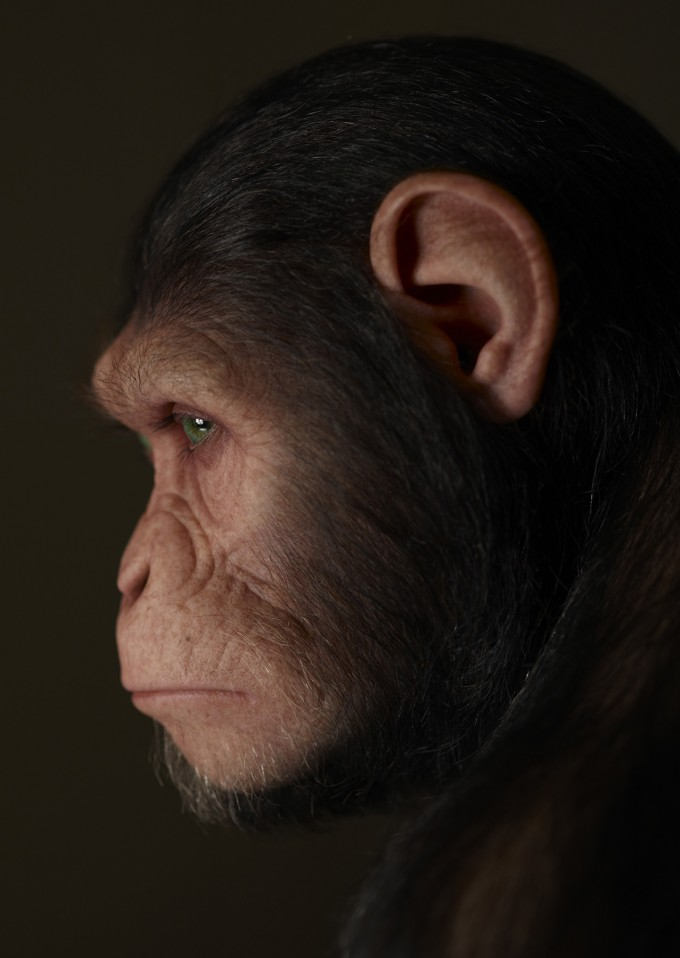 Rise_of_the_Planet_of_the_Apes_Concept_APEheadApehead-295