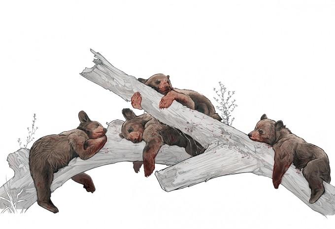AJ_Frena_Art_Illustration_16_Bear_Cubs